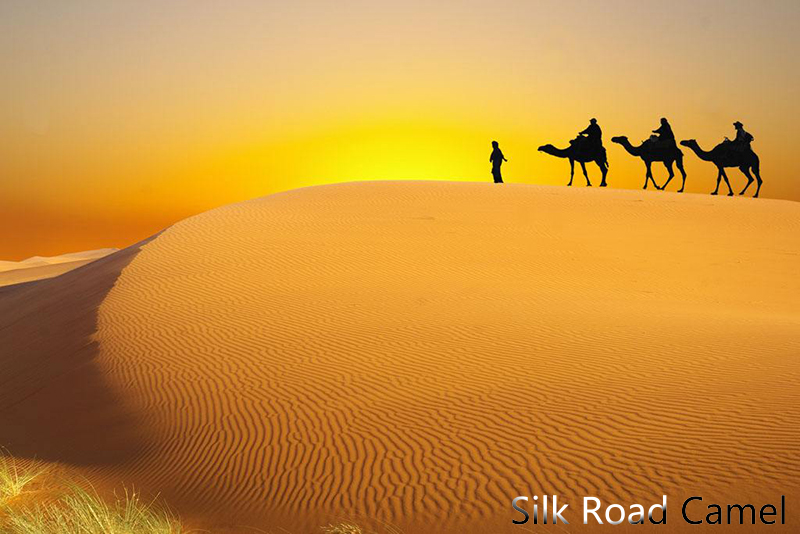 silk road camel